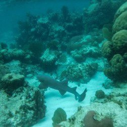Sharks of Shark & Ray Alley Pt.I | Caye Caulker, Belize