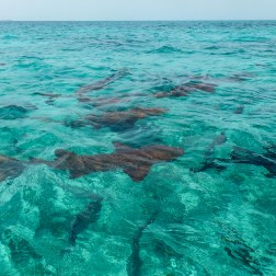 Shark & Ray Alley | Caye Caulker, Belize