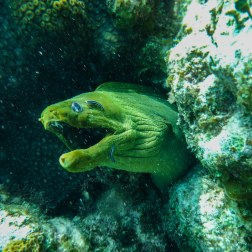 Moray Eel | Caye Caulker, Belize