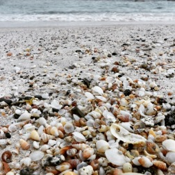 Elafonissi Shells