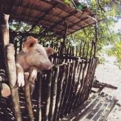 Palawan | Sibultan's Local Residents