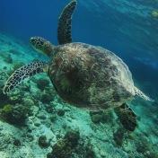 Palawan | Turtles in El Nido
