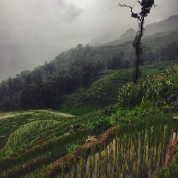 Rainy, Magical Rice Paddies | Sapa