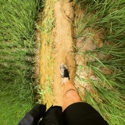 Trekking the Paddies | Sapa