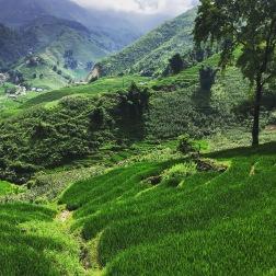 Rolling Rice Paddies | Sapa