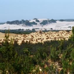 Dunes Beyond The Pinnacles | WA