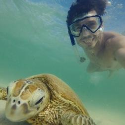 Turtle Selfie | Osprey Bay, WA