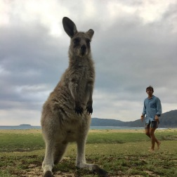 Giant 'Roo | Pebbly Beach, NSW