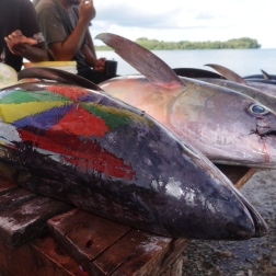 Catch of the Day, Gizo, Solomon Islands