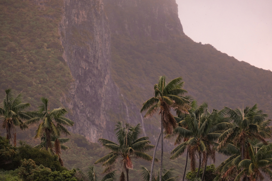 Palm trees with mountain in the background