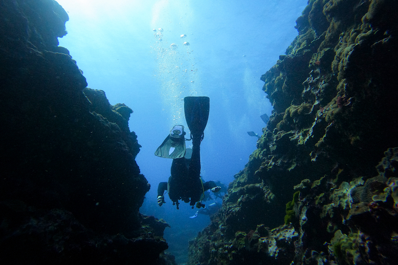 Scuba diver swims through coral of LHI